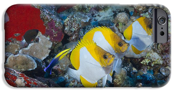 Undersea Photography iPhone Cases - Three Pyramid Butterflyfish iPhone Case by Dave Fleetham