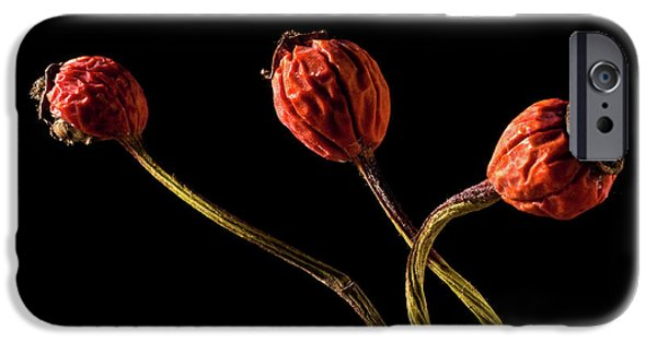 Tripple iPhone Cases - Three Rose Hips iPhone Case by  Onyonet  Photo Studios