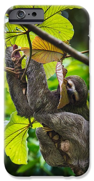 Sloth iPhone Cases - Three-toed Sloth, Sarapiqui, Costa Rica iPhone Case by Panoramic Images