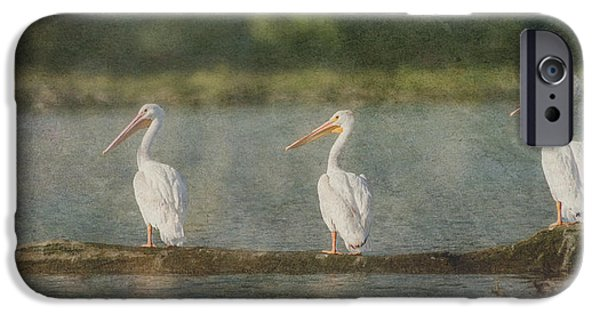 Fauna iPhone Cases - Three White Pelicans iPhone Case by Patti Deters