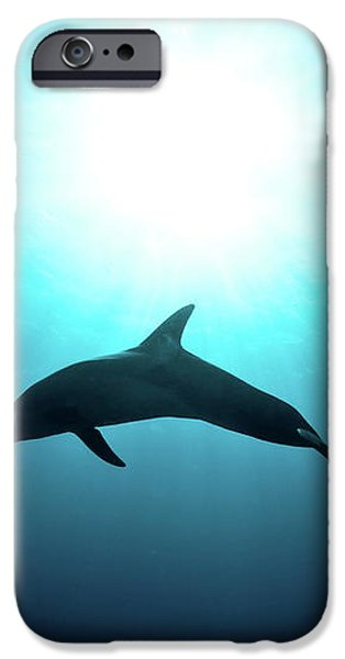 three year old Dolphin  iPhone Case by Hagai Nativ