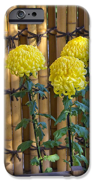 Bamboo Fence iPhone Cases - Three Yellow Blooms iPhone Case by Richard Baker