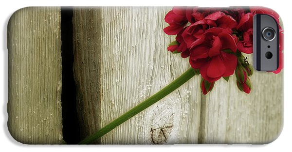 Red Geraniums iPhone Cases - Through iPhone Case by Bonnie Bruno