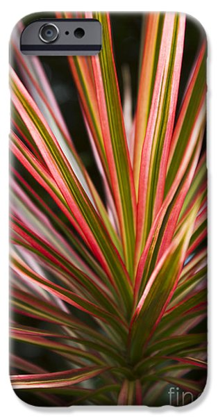 Floral Photographs iPhone Cases - Ti Plant Cordyline terminalis Red Ribbons iPhone Case by Sharon Mau