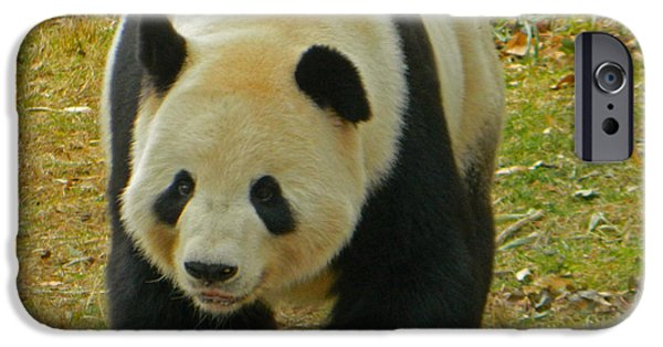 Smithsonian iPhone Cases - Tian Tian - Papa Panda iPhone Case by Emmy Marie Vickers