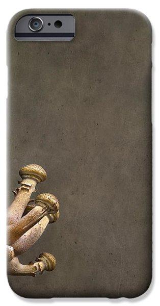 Ties That Bind iPhone Case by Evelina Kremsdorf