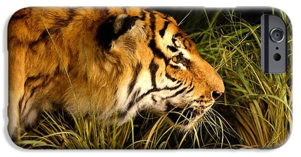 The Tiger iPhone Cases - Tiger iPhone Case by Andrei Draghici