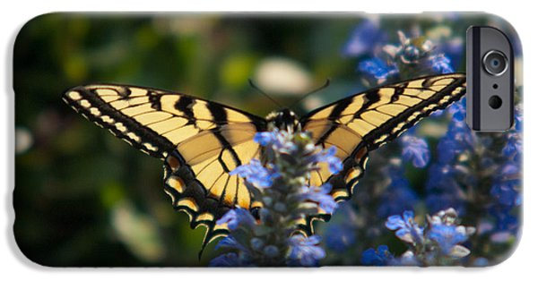 Buterfly iPhone Cases - Tiger Butterfly Visiting Ajuga iPhone Case by Douglas Barnett