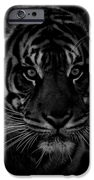 The Tiger iPhone Cases - Tiger Closeup iPhone Case by Athena Mckinzie