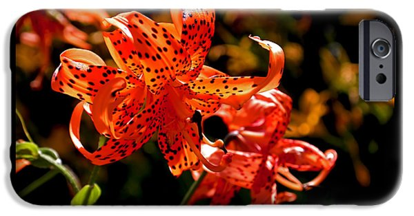 Floral Photographs iPhone Cases - Tiger Lilies iPhone Case by Rona Black