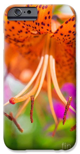 The Tiger iPhone Cases - Tiger Lily iPhone Case by Verena Matthew