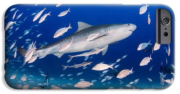 Shark Pyrography iPhone Cases - Tiger Shark iPhone Case by Ricardo  Ramos