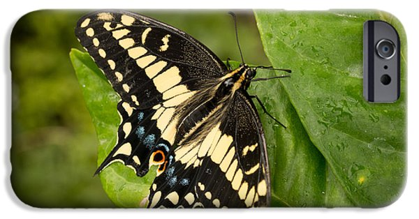 Animals Photographs iPhone Cases - Tiger Swallowtail Butterfly iPhone Case by Ana V  Ramirez