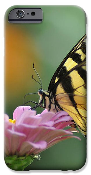 Tiger Swallowtail Butterfly iPhone Case by Bill Cannon