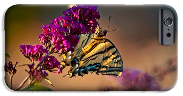 Prescott iPhone Cases - Tiger Swallowtail Butterfly iPhone Case by Laura Scott