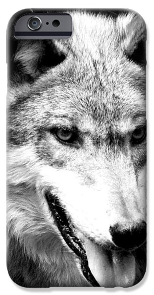 Recently Sold -  - Dog Close-up iPhone Cases - Timber Wolf iPhone Case by Debra     Vatalaro