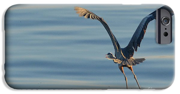 Flora iPhone Cases - Time to Fly...Great Blue Heron iPhone Case by Barbara Dalton