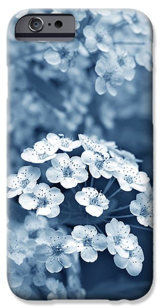 Spirea iPhone Cases - Tiny Spirea Flowers in Blue iPhone Case by Jennie Marie Schell