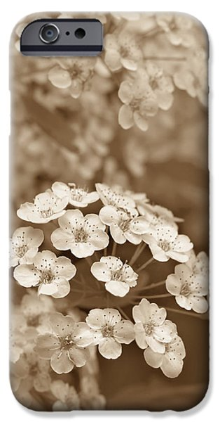 Spirea iPhone Cases - Tiny Spirea Flowers in Sepia iPhone Case by Jennie Marie Schell
