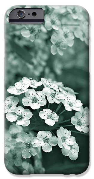Spirea iPhone Cases - Tiny Spirea Flowers in Teal iPhone Case by Jennie Marie Schell
