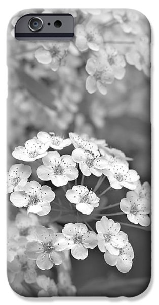 Spirea iPhone Cases - Tiny Spirea Flowers Monochrome iPhone Case by Jennie Marie Schell