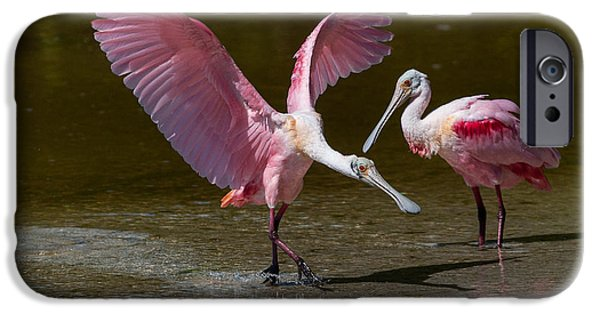 J N Ding Darling National Wildlife Refuge iPhone Cases - Tip-Toe Landing iPhone Case by Robert Panozzo