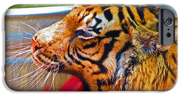 The Tiger iPhone Cases - Tired Tiger iPhone Case by Mark Yacovetta