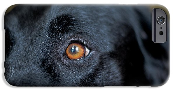 Mixed Labrador Retriever iPhone Cases - To See In Her Eyes iPhone Case by Richard Booth