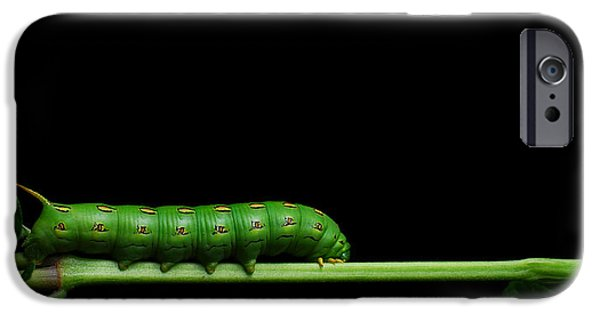 Caterpillar iPhone Cases - Tomato Hornworm iPhone Case by Noah Bryant