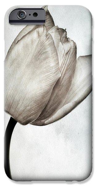Botanical Photographs iPhone Cases - Toned Tulip iPhone Case by John Edwards