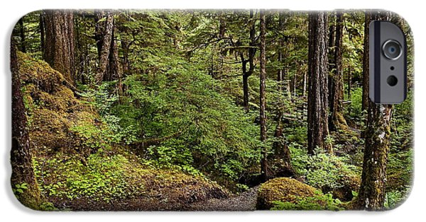 Tongass iPhone Cases - Tongass National Forest iPhone Case by John Greim