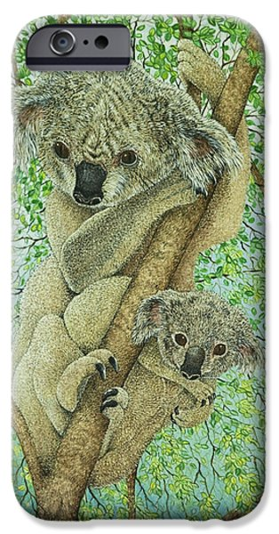 Koala iPhone Cases - Top Of The Tree iPhone Case by Pat Scott