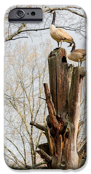 Geese iPhone Cases - Top Of The World iPhone Case by Bill Wakeley