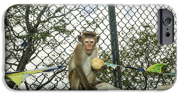 Fed iPhone Cases - Toque macaque iPhone Case by Patricia Hofmeester