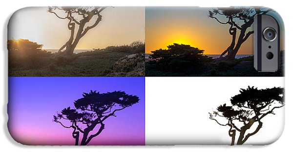 Ocean Sunset iPhone Cases - Torrey Pine Study iPhone Case by Peter Tellone