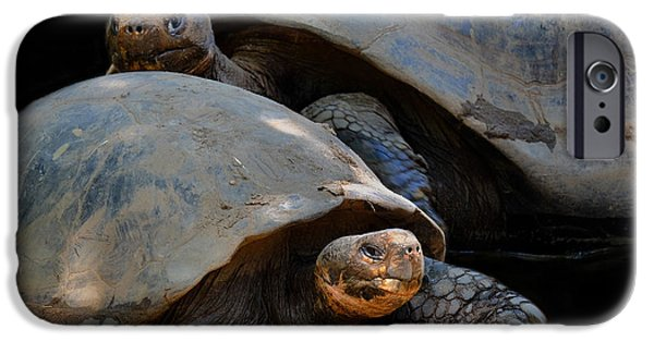 Drama iPhone Cases - Tortoise Drama iPhone Case by Constance Lowery