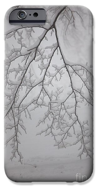 Wintertime iPhone Cases - Touch the ground iPhone Case by Gabriela Insuratelu