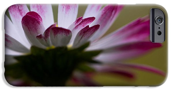 Close Up Floral Pyrography iPhone Cases - Tranquility I iPhone Case by Peteris Vaivars