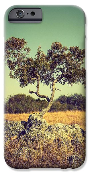 Young iPhone Cases - Tree and Rocks iPhone Case by Carlos Caetano