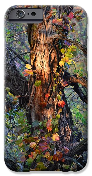 Autumn iPhone Cases - Tree and Vine iPhone Case by Michael Hills
