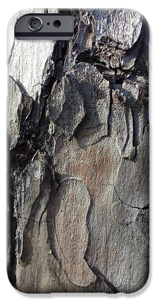 Built Structure iPhone Cases - Tree Bark 5 iPhone Case by Jean Bernard Roussilhe