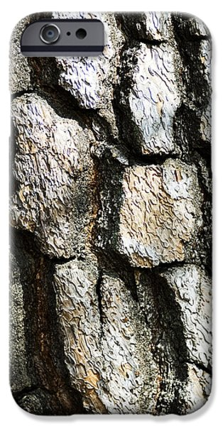 Shinjuku iPhone Cases - Tree Bark iPhone Case by Bill Brennan - Printscapes