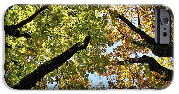 Botanical iPhone Cases - Tree Canopy iPhone Case by Stuart Litoff