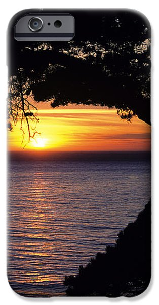 Tree Framing Seascape Sunset iPhone Case by Ali ONeal - Printscapes