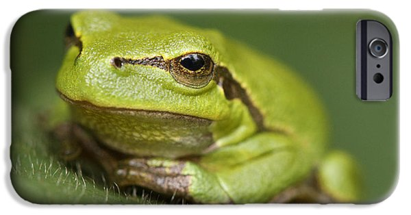 July iPhone Cases - Tree Frog Cose up iPhone Case by Roeselien Raimond
