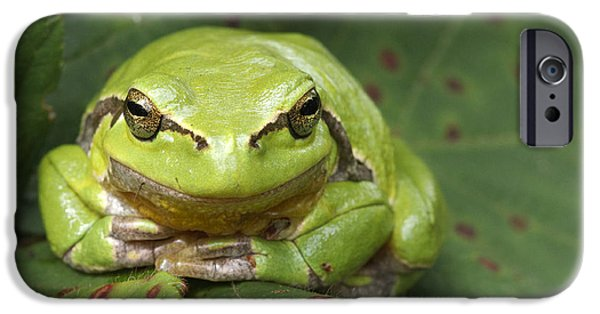 Frogs Photographs iPhone Cases - Tree Frog en Face iPhone Case by Roeselien Raimond