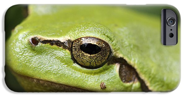 Frogs Photographs iPhone Cases - Tree Frog Portrait iPhone Case by Roeselien Raimond
