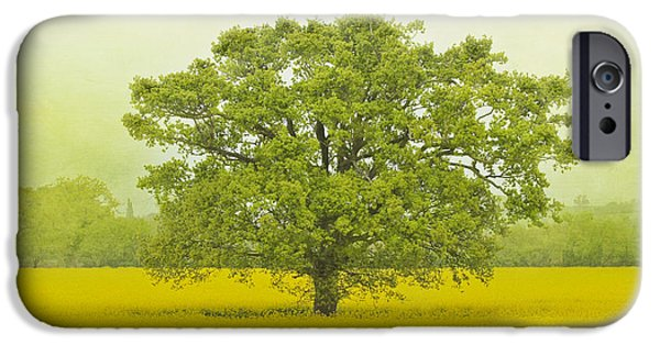 Meadow Photographs iPhone Cases - Tree in a Field of Gold iPhone Case by Terri  Waters