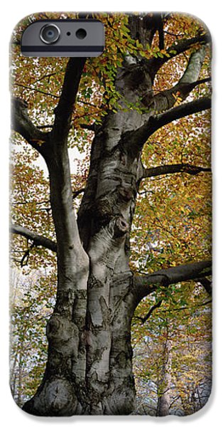 Bayern iPhone Cases - Tree In The Black Forest, Germany iPhone Case by Konrad Wothe