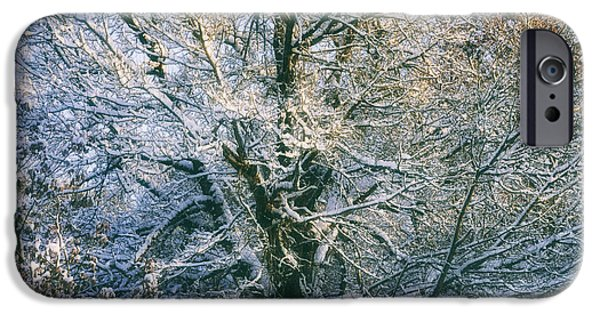 Winter Trees Photographs iPhone Cases - Tree in winter iPhone Case by SK Pfphotography